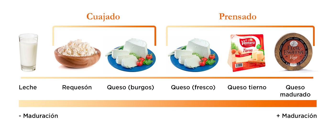 Proceso de maduración del queso de menor a mayor en el que aparece un vaso de leche, un bol con requesón, un plato con queso de burgos, un plato con queso fresco, un pack de queso tierno El Ventero y una rueda de queso madurado Flor de Esgueva Viejo
